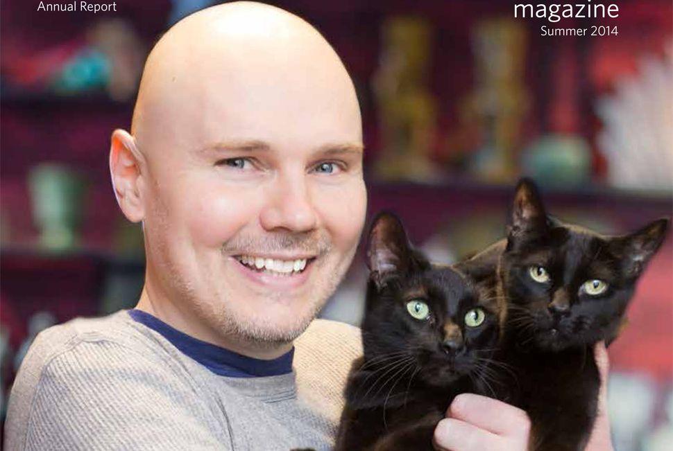 Billy Corgan Cats